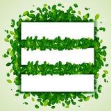 Contexto com folhas verdes Fotografia de Stock