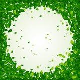 Contexto com folhas verdes Imagens de Stock