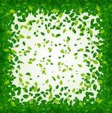 Contexto com folhas verdes Fotos de Stock