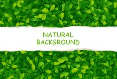 Contexto com folhas verdes Imagens de Stock Royalty Free