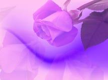 Contexto das rosas Foto de Stock Royalty Free