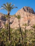 Contexto de la montaña del jardín de la palmera Fotografía de archivo libre de regalías