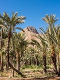 Contexto de la montaña del jardín de la palmera Imágenes de archivo libres de regalías