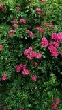 Contexto de las plantas florecientes Foto de archivo