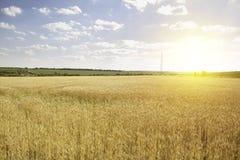 Contexto de oídos de maduración del campo de trigo amarillo en el fondo anaranjado nublado del cielo de la puesta del sol Imágenes de archivo libres de regalías