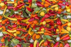 Contexto de pimentas picantes, de alho e de bauleafs Foto de Stock