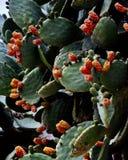 Contexto del cactus Fotografía de archivo libre de regalías