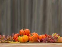 Contexto del otoño Fotografía de archivo libre de regalías