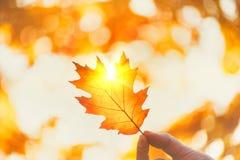Contexto do outono Pessoa que guarda a folha do outono sobre o fundo borrado do outono foto de stock royalty free