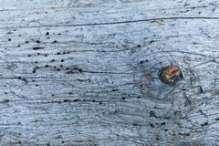 Contexto envejecido abstracto del arte Agujeros de la broma en el fondo de madera imagen de archivo