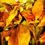 Contexto hermoso de las hojas de otoño caidas Imagen de archivo