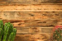 Contexto hogareño del adorno del cactus Imágenes de archivo libres de regalías