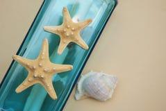 Contexto náutico do tema, garrafa decorativa com shell, estrela do mar no fundo neutro do marfim Lugar para o texto Foco seletivo imagem de stock