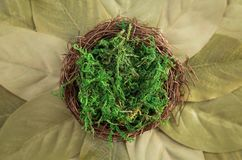 Contexto recién nacido verde de Digitaces fotografía de archivo libre de regalías