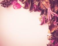 Contexto secado de la flor Fotografía de archivo