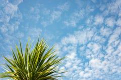 Contexto tropical Imagenes de archivo
