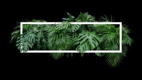Contexto tropical da natureza do arbusto da planta da selva da folha das folhas com w fotografia de stock