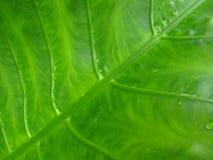 Contexto verde Fotografia de Stock