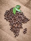 Continent Africa and the Island of Madagascar from fresh roasted Grains of Robusta Arabica Coffee. With Green Leaves of coffea tree and background of sacking Stock Images