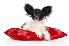 Continentaal Toy Spaniel-puppy die op rood hoofdkussen liggen royalty-vrije stock foto