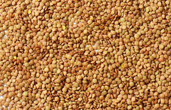 Continental lentils Stock Images