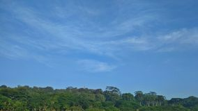 Cirrus clouds above tropical rainforest. Continuous canopy of forest trees on Gombak hill in Singapore royalty free stock photo