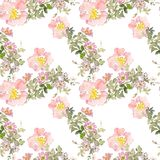 Seamless pattern wild pink roses flower and green leaves. Watercolor floral illustration. Botanical decorative element royalty free stock images