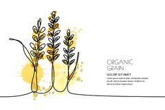 Continuous line drawing. Vector watercolor wheat, rice ears and grains. Design for cereal products, bakery. Continuous line drawing. Vector linear illustration Royalty Free Stock Photos