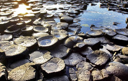 The continuous trickle of water over the hexagonal Basalt slabs of Giants Causeway. Antrim Coastline, Northern Ireland. The Giants causeway is the most popular royalty free stock image