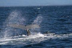 Conto da baleia foto de stock