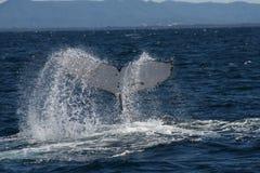 Conto da baleia fotografia de stock