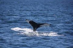 Conto da baleia Fotografia de Stock Royalty Free