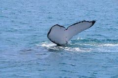 Conto da baleia Fotos de Stock