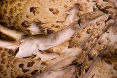 Conto de fadas de madeira. Imagem de Stock