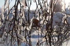 Conto de fadas do inverno Imagem de Stock Royalty Free
