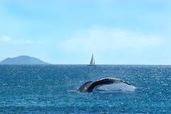 Conto de uma baleia Imagens de Stock Royalty Free
