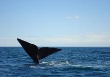 Conto de uma baleia de corcunda Imagens de Stock