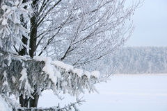 Conto do inverno Imagens de Stock