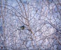 Conto do ` s do inverno Fotos de Stock