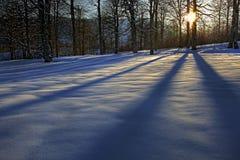 Conto sobre a floresta do inverno Imagens de Stock