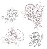 Contornea las flores de salvaje subió Fotografía de archivo libre de regalías
