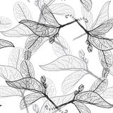Contorni delle foglie su un fondo bianco modello senza cuciture floreale, Fotografia Stock Libera da Diritti