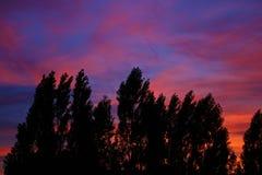 Contorno das árvores com por do sol colorido imagens de stock