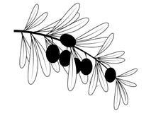Contorno de la rama de olivo Imagen de archivo libre de regalías