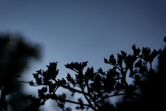 Contorno de plantas contra el cielo nocturno oscuro fotos de archivo libres de regalías