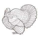 Contorno de Turquía aislado en el fondo blanco stock de ilustración
