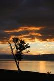 Contorno de uma árvore em um fundo do por do sol brilhante Fotos de Stock Royalty Free