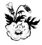 Contorno del fiore dei papaveri Fotografia Stock Libera da Diritti