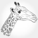 Contorno nero isolato giraffa su fondo bianco Schizzo, mano Fotografia Stock