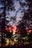 Contornos de árboles en puesta del sol Foto de archivo libre de regalías
